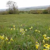 Batts Combe Grassland