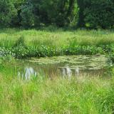 wetland creation usa